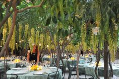 hanging yellow wisteria brought in for this wedding in capri to hang over the tables to give lush garden effect. design sugokuii events www.sugokuii-events.com #capri #weddinginitaly #capriwedding