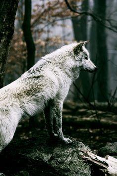 .Follow my board  http://www.pinterest.com/vipinjoc/wildlife-tourisms-save-wildlife