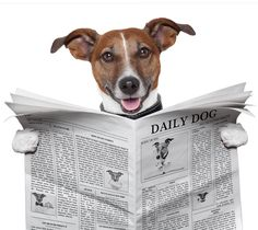Photograph Composition Jack Russell Newspaper Toilet Funny 12X16 Framed Print