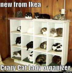 crazy cat lady - Google Search