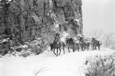 Cowboy Gear, Fur Trade, Camping Packing, Horse Quotes, Old West, Photo Contest, Cowboys, Grand Canyon, Colorado