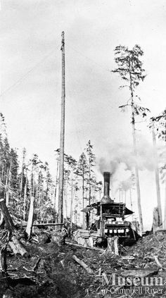 Donkey and spar tree at Bendickson Logging.  (unknown year) Arthur Bendickson Collection - CR Museum.