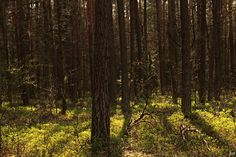 #źródłakrólewskie #drzewa #las #fotografia