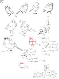 how to draw a robin More