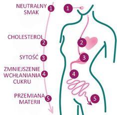 W jaki sposób chia wpływają na nasze zdrowie?