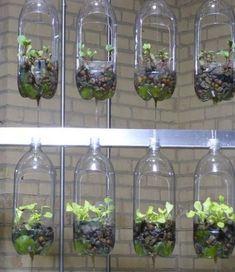 Indoor Gardens For Your Home Hydroponic Gardening, Hydroponics, Container Gardening, Indoor Gardening, Indoor Herbs, Backyard Garden Landscape, Small Backyard Gardens, Modern Backyard, Garden Renovation Ideas