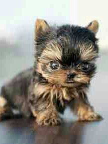 I want this lil thing