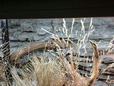 Pana Stachtidis, Germany Rock Background, Moose Art, Germany, Animals, Terrariums, Reptiles, Animales, Animaux, Deutsch