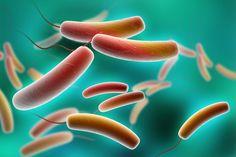 7 Ways Probiotics Help You To DETOXIFY Your Health
