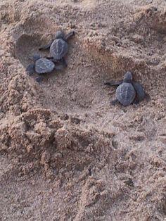 Mazatlan turtles