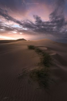 Sable by Andy Smith Images