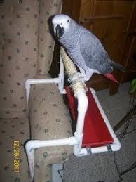 DIY Parrot Armrest Perch I wonder if this would fit over the console in my car Diy Parrot Toys, Diy Bird Toys, Parrot Perch Diy, Bird Aviary, Bird Perch, Pet Bird Cage, Parrot Play Stand, Amazon Parrot, Bird Stand