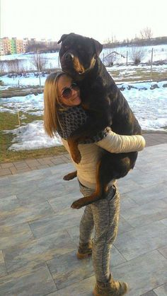 German Rottweiler, Rottweiler Love, Rottweiler Puppies, Best Puppies, Cute Puppies, Dogs And Puppies, Doggies, Big Dogs, I Love Dogs