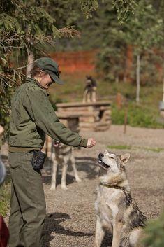 Meet the Canine Rangers at the Denali National Park Kennels // Local Adventurer Glacier Bay National Park, Katmai National Park, National Parks, Alaska Travel, Travel Usa, Visit Alaska, Indiana Dunes, Kenai Fjords, Road Trip Usa
