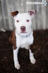Ryder- male terrier mix in New Canaan, CT