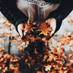 autumn, leaves, and fall image Fall Pictures, Fall Photos, Autumn Cozy, Fall Winter, Late Autumn, Fall Inspiration, Autumn Walks, Autumn Photography, Hello Autumn