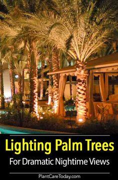 Lighting Palm Trees Illuminate Palms And Shrubs How To
