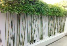 muro jardin plantas bambú