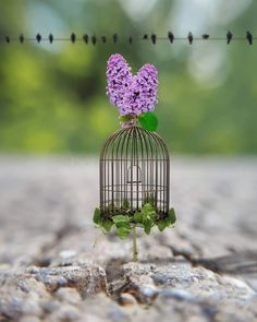Miniature Photography, Cute Photography, Amazing Pics, Beautiful Pictures, Cool Pictures For Wallpaper, Mac Wallpaper, Minimal Decor, Painting Gallery, Bird Cages
