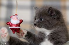 HOLIDAY CONSIDERATIONS: GIVING A PET TO SOMEONE YOU CARE ABOUT