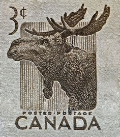 1953 Canada Moose Stamp Photograph by Bill Owen - 1953 Canada Moose Stamp Fine Art Prints and Posters for Sale ~ :) Canadian Things, I Am Canadian, Canadian History, Canadian Memes, Bill Owen, Postage Stamp Art, Going Postal, Thinking Day, Poster