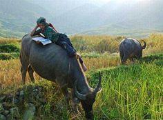 Studia su schiena di bufalo http://viaggicambogia.asiatica.com/