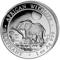 Slon - Elephant - 2011