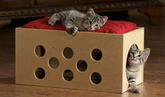 DIY here's a cheap fun way to reuse some old boxes and give your tiger a new… Gatos Cats, Diy Cat Toys, Homemade Cat Toys, Cat Crafts, Photo Chat, Cat Life, Cat Room, Cool Cats, Cat Furniture