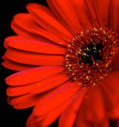 red in its vibrance....