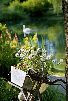 Country living...  down by the pond.