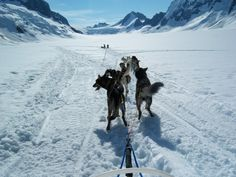 Dog sledding on a glacier in Alaska
