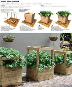 I'm going to try building my own potato growing boxes next year and give this a try. It looks like it would would great, and allow growing hundreds of pounds of potatoes with a few of these boxes scattered around the house… If you've done this I would like to hear from you… how well did it work, how many pounds did you get, tips, advice…