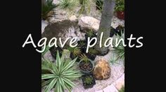 Martin Dougherty - YouTube - This is Martin Dougherty (greendougherty). Stop  by and visit our new Green Dougherty web site at: http://greendougherty.com/wp-content/greendougherty-com/the-garden-see-whats-growing/; palm Trees of the Dougherty Garden at: https://www.pinterest.com/doherty167/doughertys-garden-palm-trees-of-the-dougherty-gard/; and You Tube Videos at: https://www.youtube.com/user/canthishappen/videos