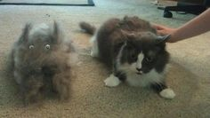 """We brushed a cat out of my cat.""  Kinda creepy but funny"