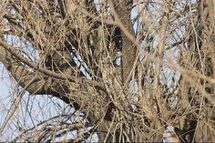 camuflagem-coruja-4