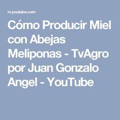 Cómo Producir Miel con Abejas Meliponas - TvAgro por Juan Gonzalo Angel - YouTube
