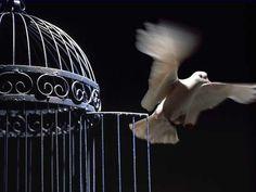 """ahaṁ tvāṁ sarvapāpebhyo mokṣyayiṣyāmi mā śucaḥ""....Grieve Not, For l Shall Free You From All Sins...Sings Krishn In Gita....!!!"