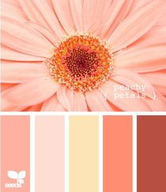 Design Seeds, for all who love color. Apple Yarns uses Design Seeds for color inspiration for knitting and crochet projects. Peach Color Schemes, Peach Colors, Color Combos, Orange Color, Orange Pink, Good Colour Combinations, Red Peach, Colours, Yellow
