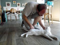 Dale with a cat at Romeow Cat Cafe, Rome - Unusual Things To Do in Rome
