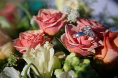 Coral roses with a surprise! Coral Roses, Florals, Wedding Flowers, Plants, Floral, Flowers, Plant, Planets, Bridal Flowers