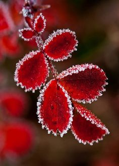 Autumn or fall is probably my favourite season. It's that time of year which marks the transition from summer into the cold winter. Henri Matisse, A Touch Of Frost, Foto Macro, Fotografia Macro, Leaf Background, Autumn Photography, Colourful Photography, Winter Beauty, Belleza Natural