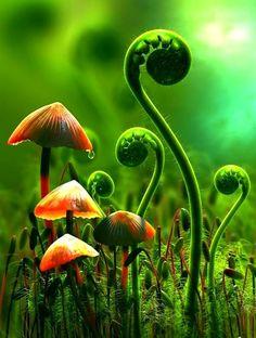 Moss, ferns and fungi. Mushroom Art, Mushroom Fungi, Orange Mushroom, Fotografia Macro, 3d Artwork, Science And Nature, Macro Photography, Floral Photography, Landscape Photography