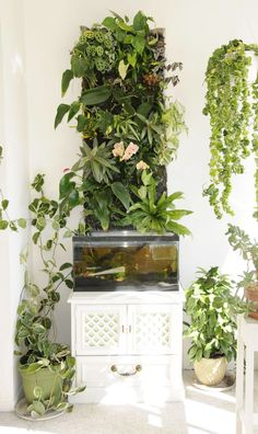 Green Wall Style Aquaponics Source Ikea Shelf Aquaponics Source Classic IBC Tote Aquaponics Source Here's a short DIY article on building your own IBC Tote aquaponics like this.. Classic Wooden Aquaponics with NFT Source Converted Gutters