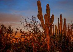 Roadside Sunset by Robert Hajdu on 500px, Baja California Sur, Mexico
