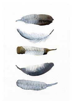 Feather art work - 5 Feathers - from original watercolor painting - black and white bird feathers - giclee artwork - Modern art