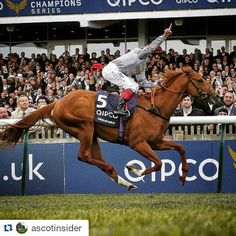 #Repost @ascotinsider ・・・ Don't miss the #RoyalAscot , one of this year's most anticipated events coming in June 14-18! #london #uk #ig_london #likenowhereelse #frankiedettori  #Horseracing #horses #racing https://www.instagram.com/thequeensgate/