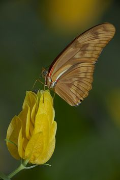 Butterfly @ San Diego Zoo Safari Park