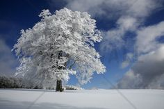 White Windbuche in Black Forest - Wall Mural & Photo Wallpaper - Photowall