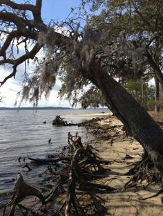 Beach at Goose Creek State Park along the Pamlico River, NC