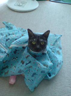 おまえら暇だから猫が袋に入ってる画像交換しようぜ - まめ速